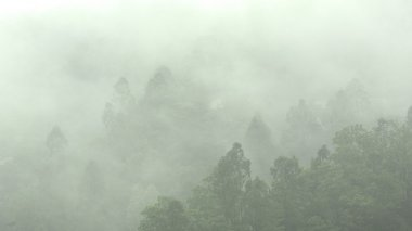 Mist in mountain with many trees
