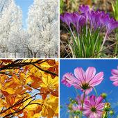 Fotografie vier Jahreszeiten