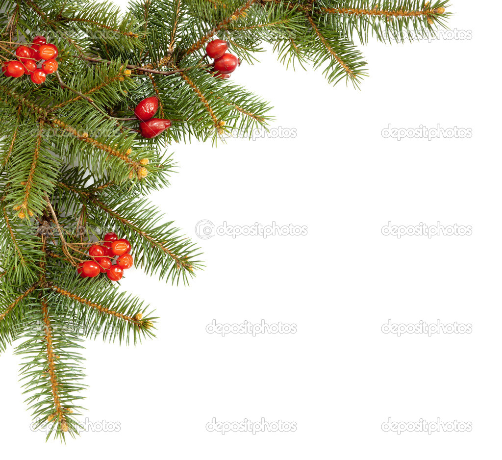Branch of fir and dried red berries