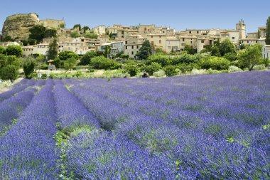 Lavender fields hilltown provence france