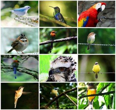 Bird Collage