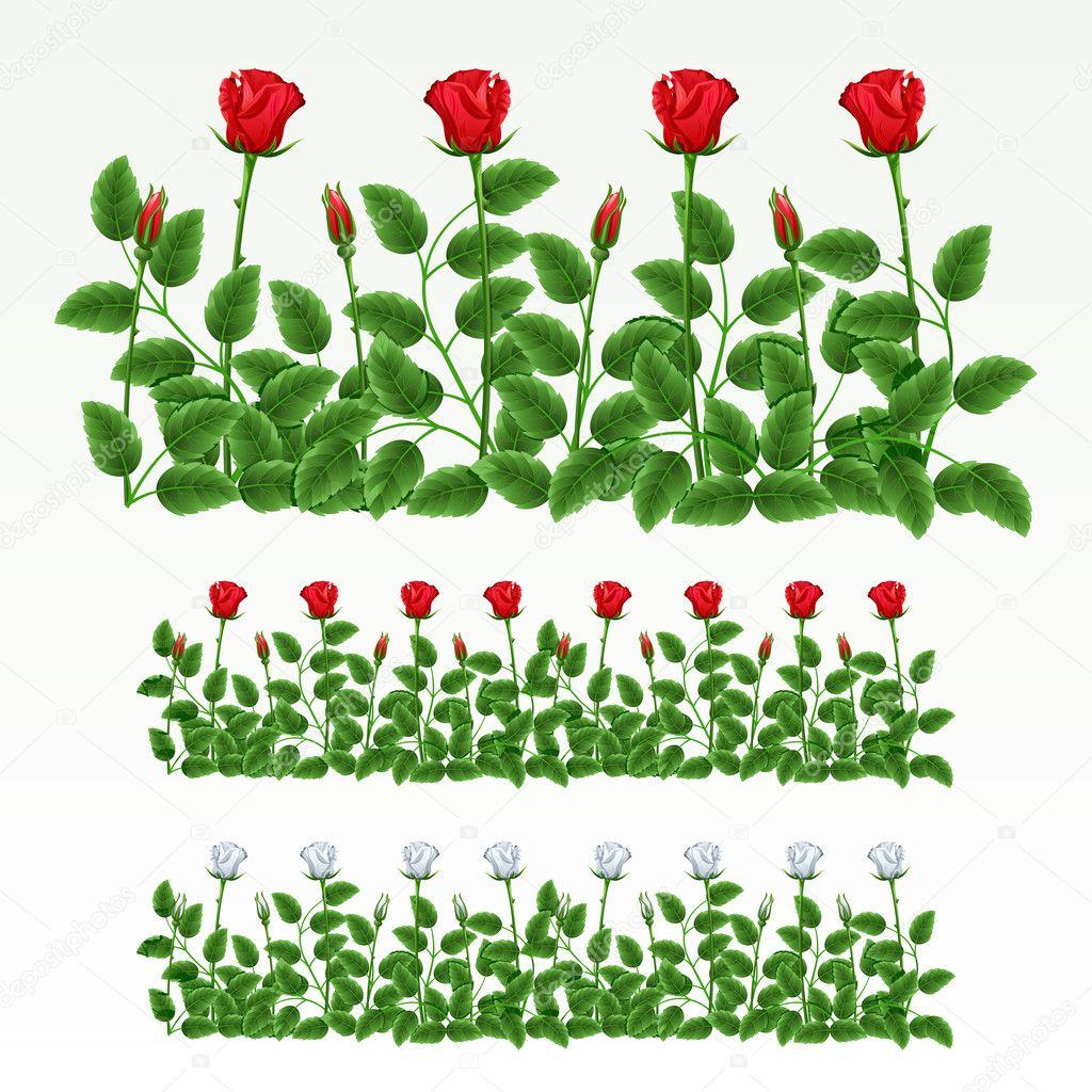 Border of roses