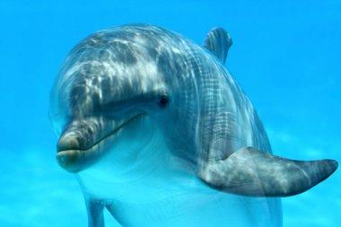 Sweet Dolphin