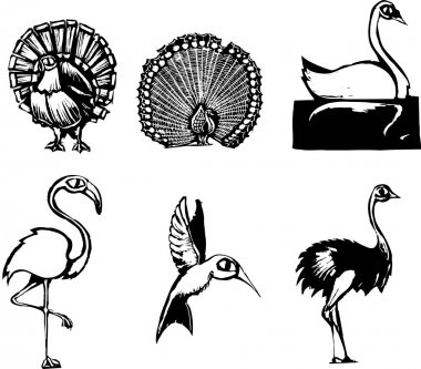 Woodcut style group of different birds clip art vector