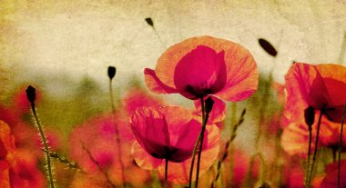 Vintage poppies background