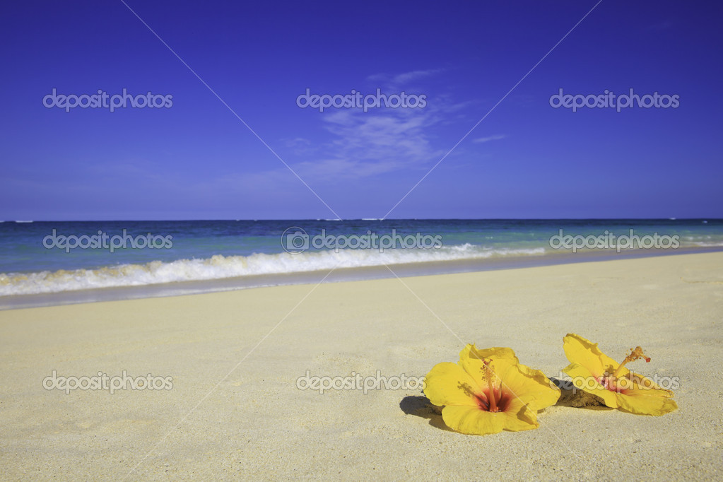 Two yellow hibiscus lie on the sand