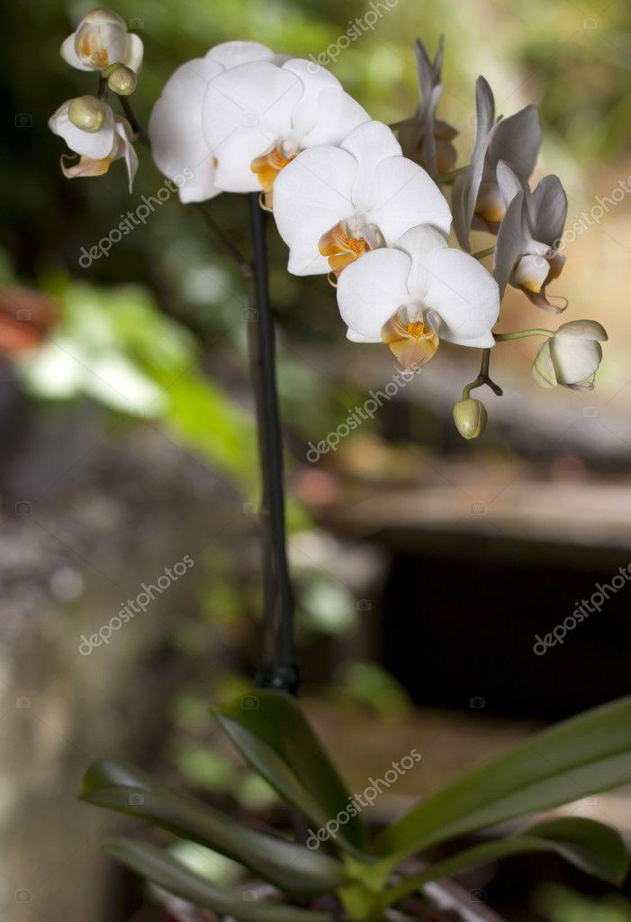 Orchidée près des escaliers de jardin — Photographie whughes98144 ...