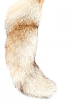 Tail of the fox #5