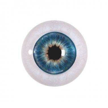 Eyeball isolated on white stock vector