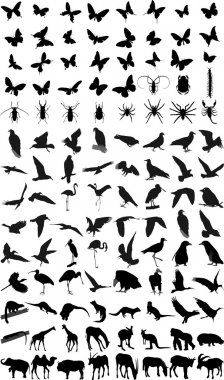 Many silhouettes of different animals, birds and insects