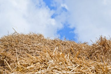 Straw, hay background