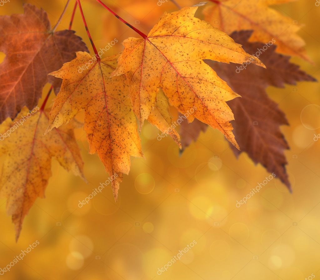 Colorful autumn leaves with shallow focus