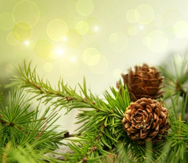 Pine cones on branches with holiday background stock vector