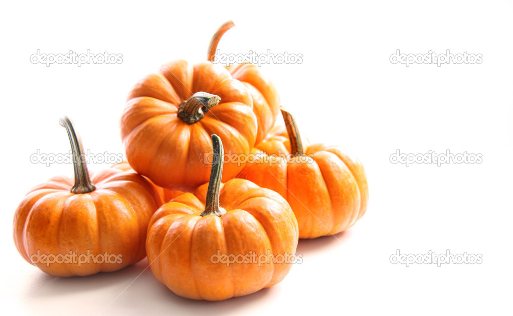 small pumpkins on white on white stock photo sandralise 4175452