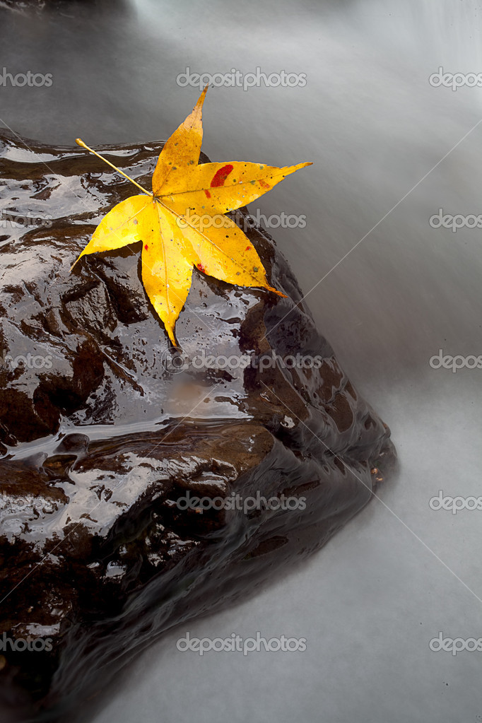 Maple on the stone with river trace color