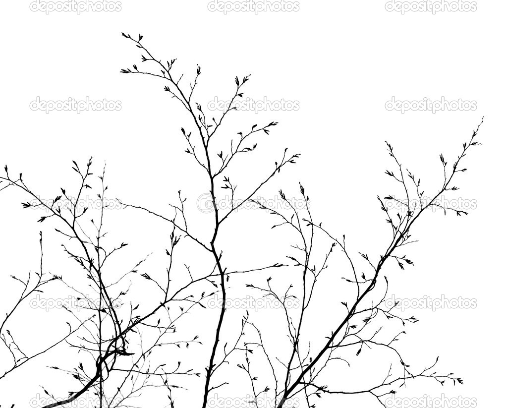 Branches on the white background