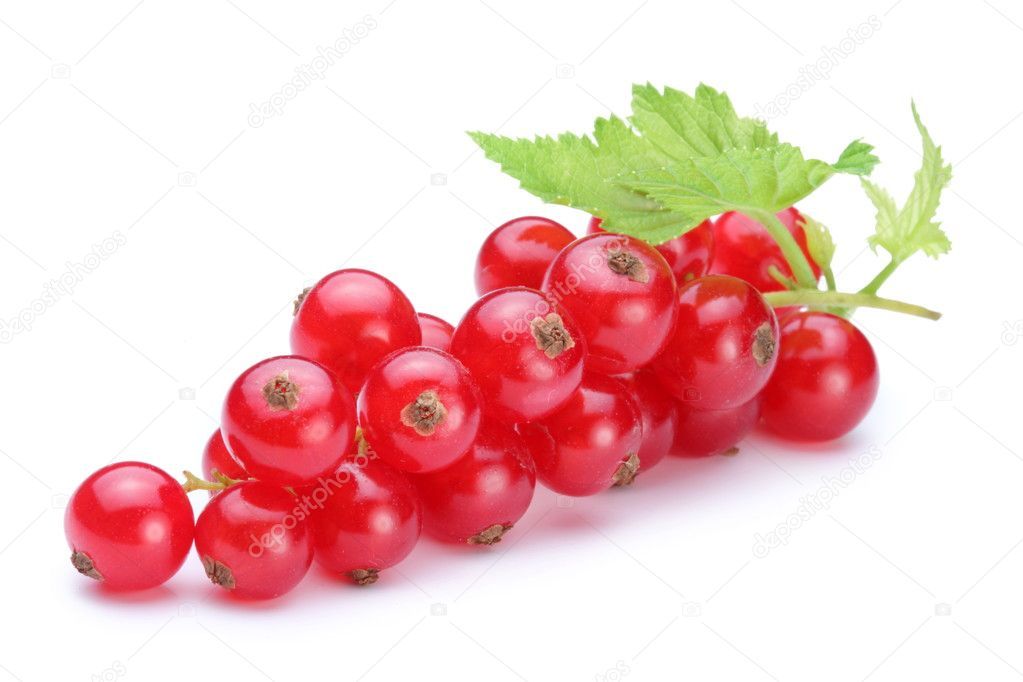Bunch of red currants on a white background