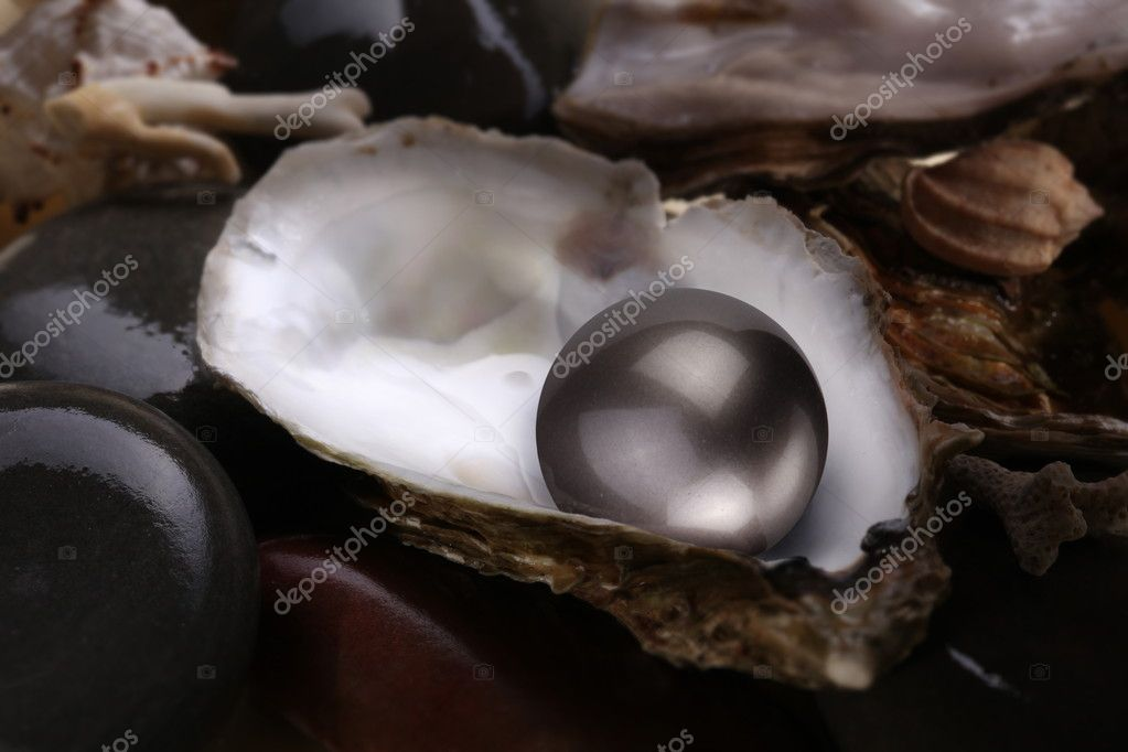 Image of a black pearl in a shell on a white background.