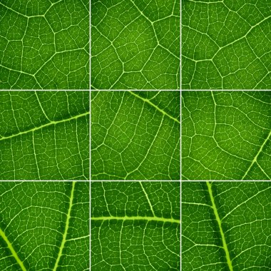 Green backgrounds set. Oak leaf closeup, super macro.