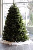 Fotografie Christmas Tree in Daylight
