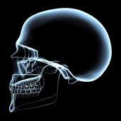 Lidská lebka - RTG boční pohled
