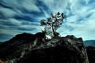 "Картина, постер, плакат, фотообои ""силуэт дерева картины природа"", артикул 4007876"