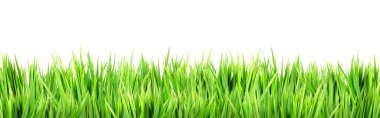 Wet green grass, isolated on white background stock vector