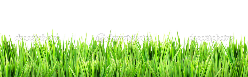 Wet green grass, isolated on white background