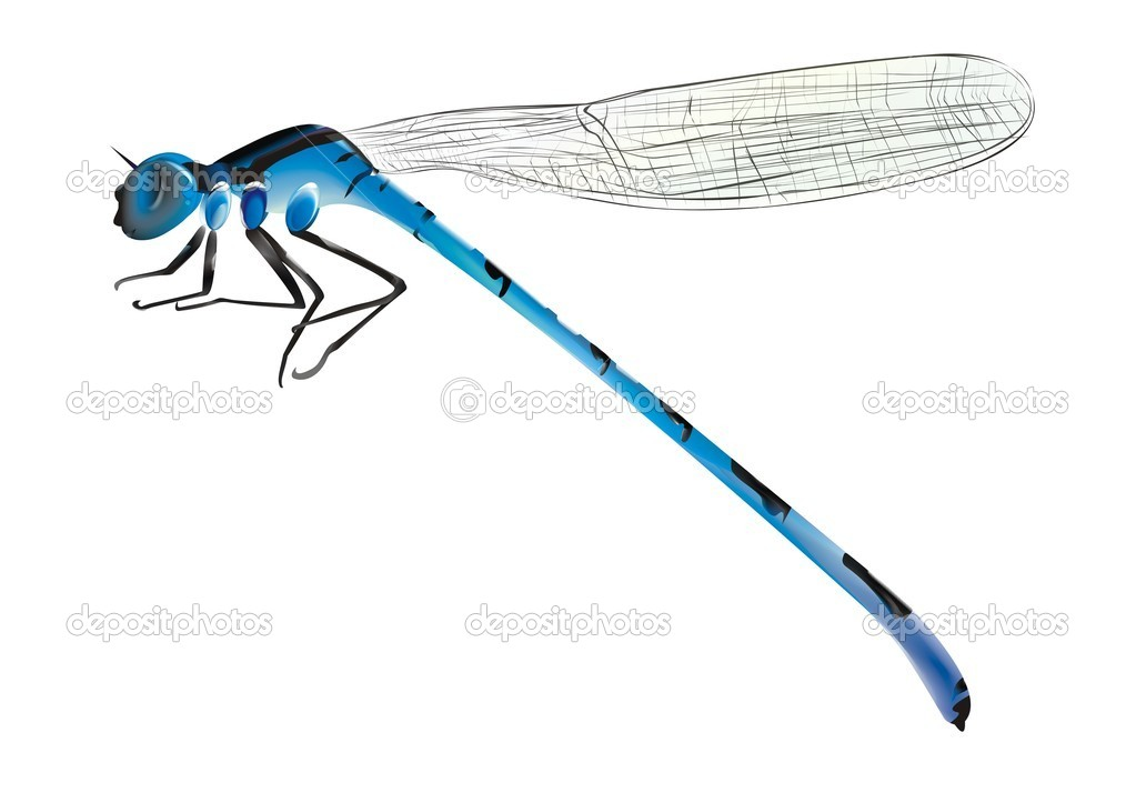 Vector blue dragonfly on white background