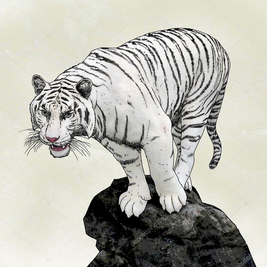 Debout De Tigre Blanc Sur Rocher Photographie Twinkieartcat C 4639632