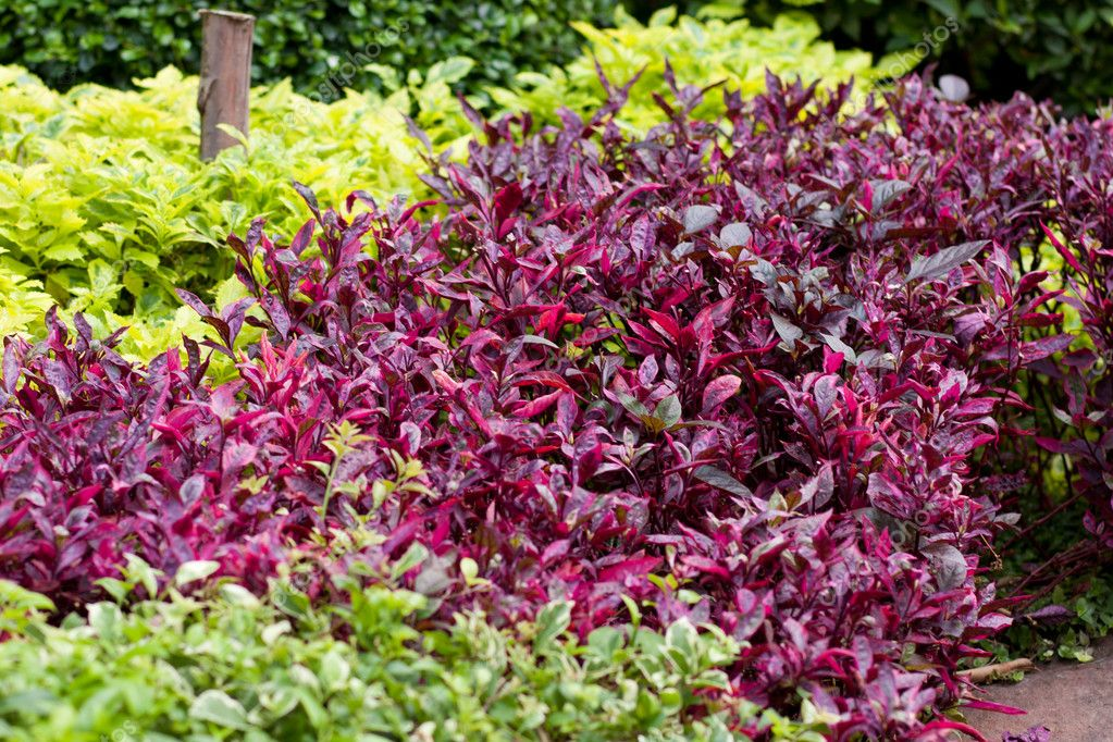Arbustos coloridos stock photo noname454 5156810 for Arbustos enanos para jardin