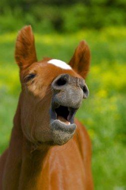 Horse. Summer.