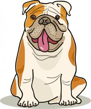 Dog breeds: bulldog