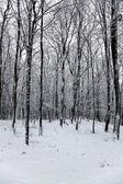 a téli erdő