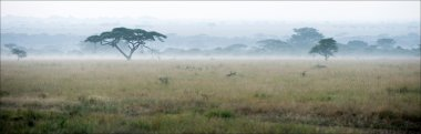 Savanna in a morning fog.