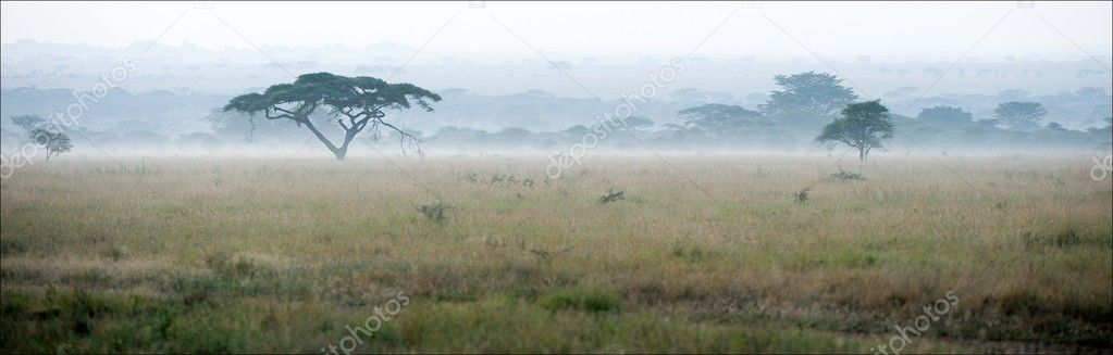 Savanna in a morning fog.