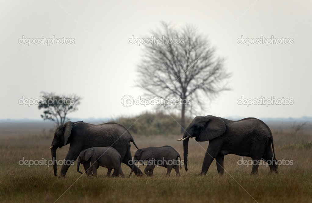 Family of elephants.