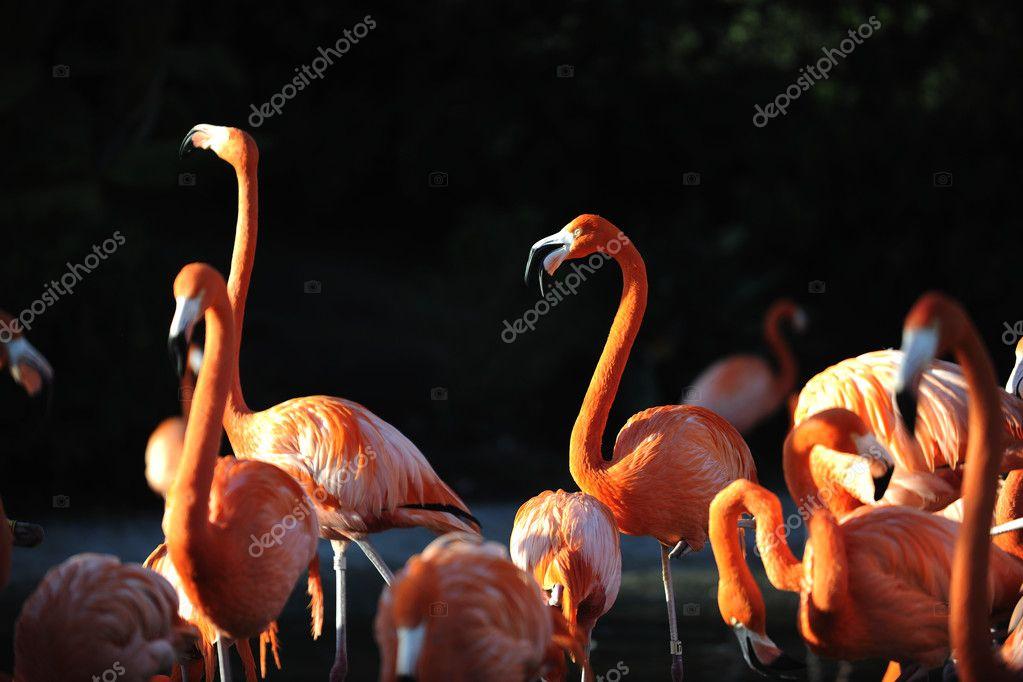 Flamingo on a decline.