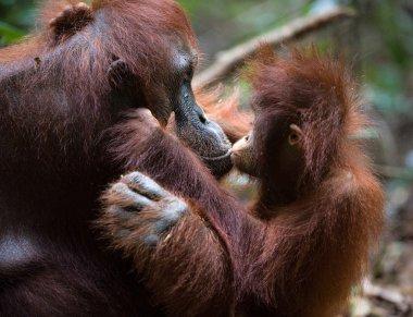 Kiss for mum.