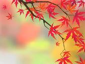 Japonský javor v barvách podzimu