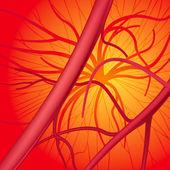 Fotografia sistema sanguigno