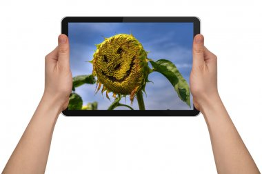 A male hand holding a touchpad pc