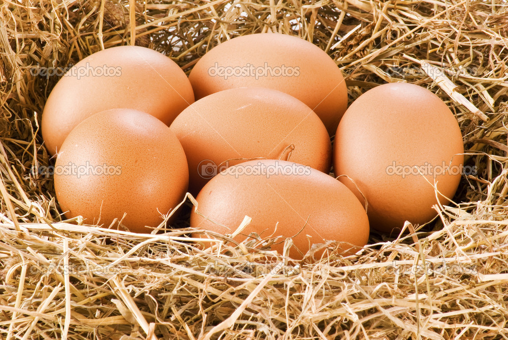 Fresh eggs in hay