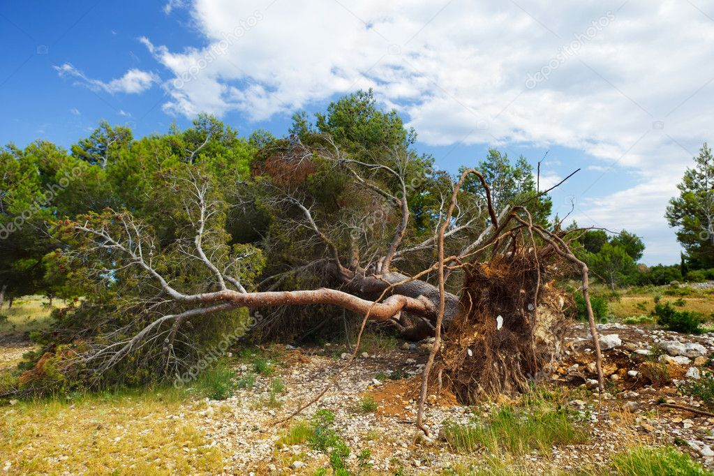 A fallen tree storm
