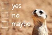 African suricate making decision