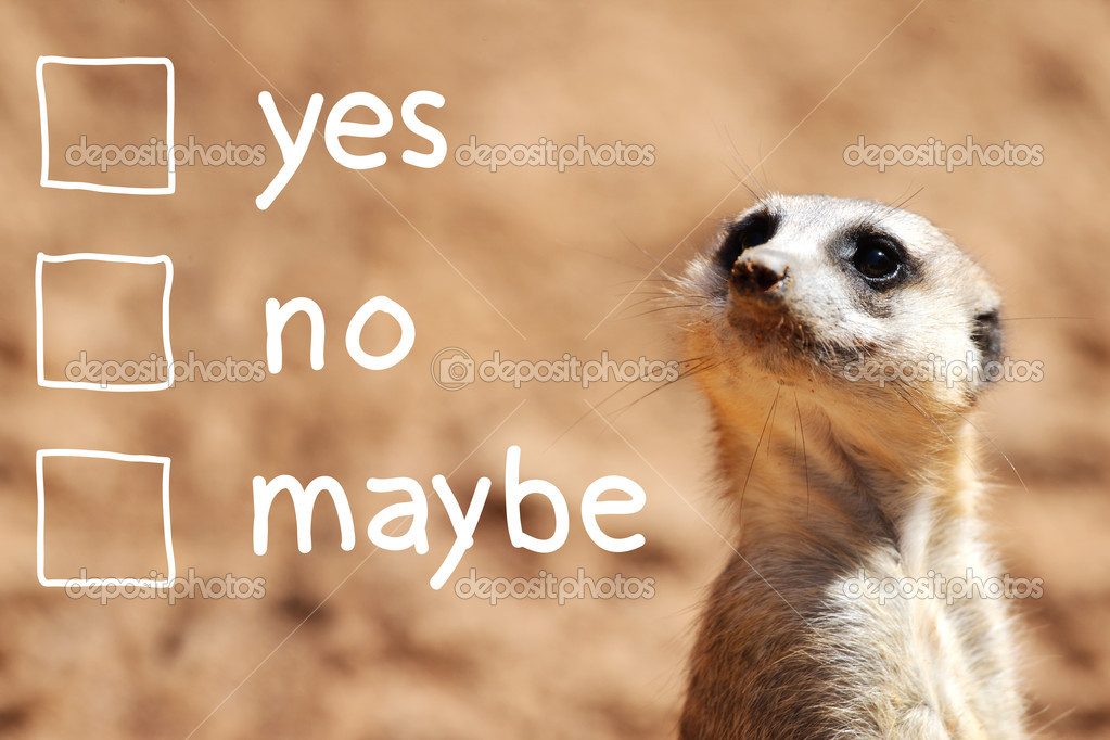 African suricate making decision