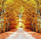 út az erdőben