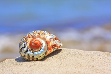 Colorful shell