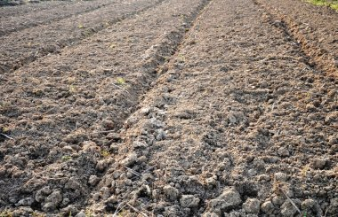 Dry vegetable plot