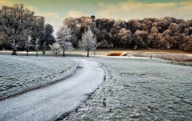 Winter scenic nature capture of forest walk in ireland